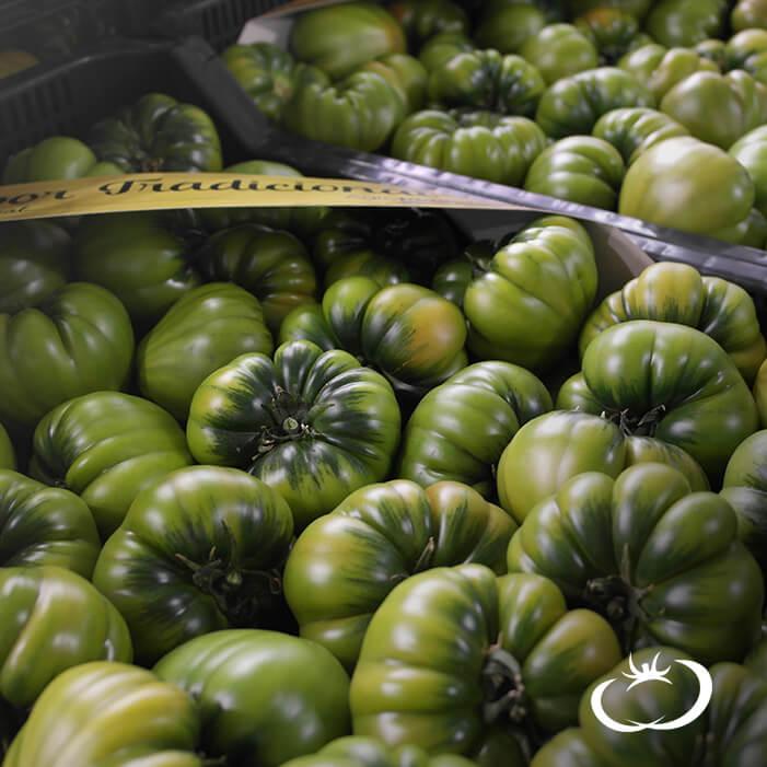 ¡Estrenamos nueva Web de Tomate Raf en tu Casa!